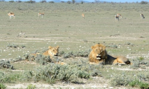 NAMIBIA / Ovamboland / Etosha Park / Kociaki