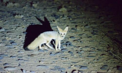 Zdjecie NAMIBIA / Park Narodowy Namib / Pustynia Namib / Przyłapany nocą