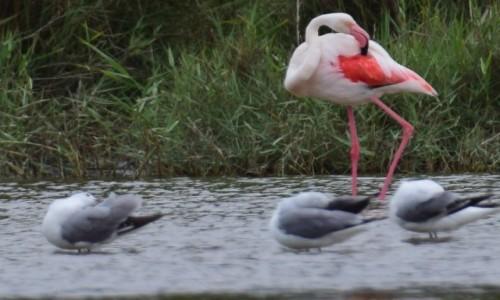 Zdjecie NAMIBIA / Central Namibia  / Swakopmund / Ptaki