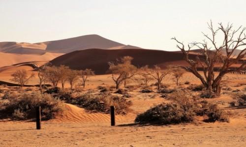 Zdjecie NAMIBIA / Park Narodowy Namib Naukluft / Pustynia Namib / Słońce już nisko...