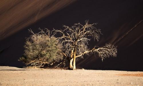 NAMIBIA / Park Narodowy Namib Naukluft / Wydma 45 / Namibia