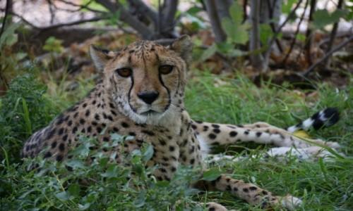 Zdjecie NAMIBIA / Północna Namibia / Kamanjab / Farma Otjitotongwe  / Kociak dla