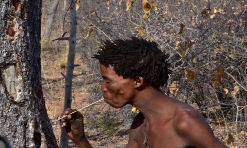 Zdjecie NAMIBIA / Północna Namibia / Kotlina Kalahari / Buszmeni