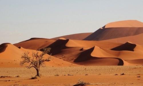 NAMIBIA / Park Narodowy Namib Naukluft / Pustynia Namib / Malownicze zawijasy, które nieustannie mnie zachwycają