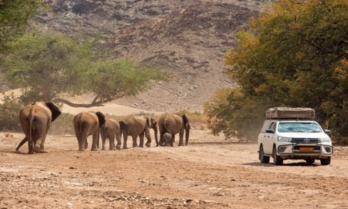 NAMIBIA / Kaokoland / Hoanib river / Namibia
