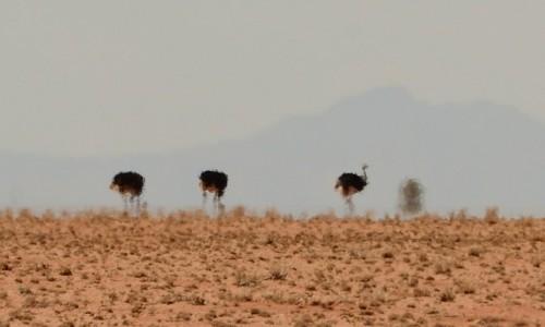 NAMIBIA / Park Narodowy Namib / rejon Solitaire / strusie widma