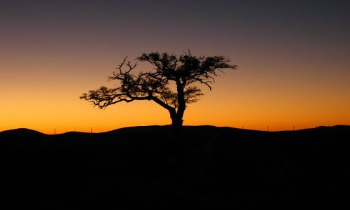 Zdjecie NAMIBIA / okolice Solitaire / droga / Colours of Africa