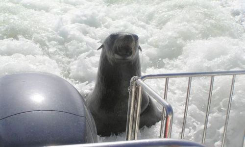 NAMIBIA / brak / zatoka Walvis Bay / Otwórzcie! Proszę!