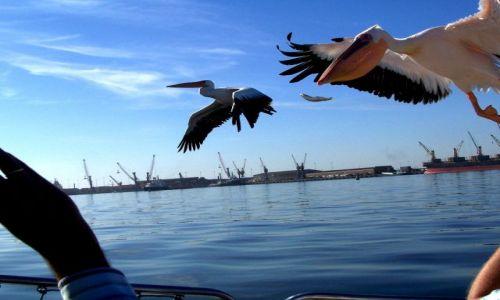 NAMIBIA / brak / zatoka Walvis Bay / a może coś dadzą?