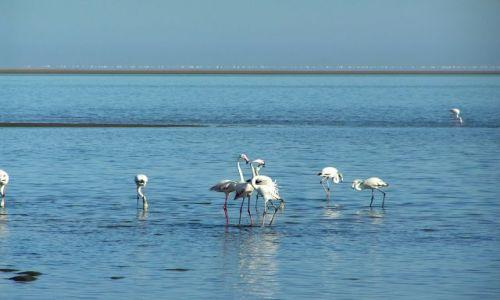 NAMIBIA / brak / zatoka Walvis Bay / Flamingi