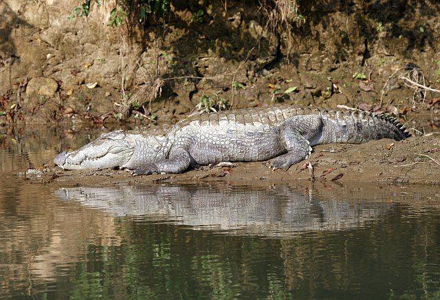 Zdjęcia: Chitwan - Sauraha, Chitwan, krokodyl, NEPAL