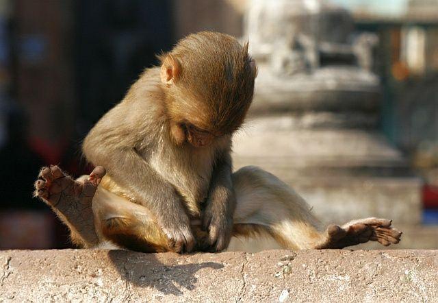 Zdjęcia: Swayambhunath, Kathmandu, uhm, NEPAL