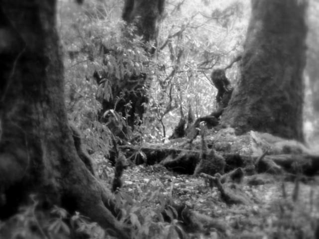 Zdjęcia: W drodze na Mardi Himal Base Camp, Kaski, Odpoczywający leśny człowiek, NEPAL