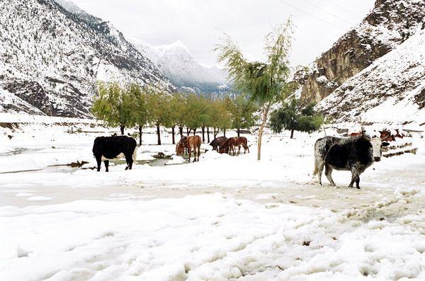 Zdjęcia: Jomson Trek, Jomson w śniegu, NEPAL