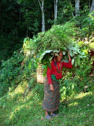 Zdjęcia: Sarangkot, ludzie lasu i pol ryzowych, NEPAL