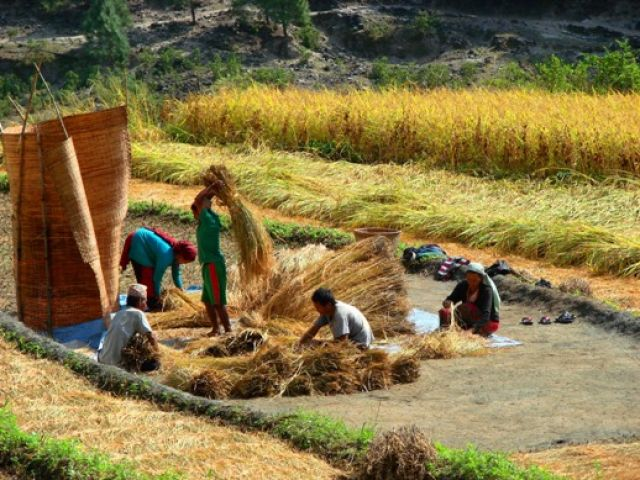 Zdjęcia: w drodze na sam dol Pokhara, na polu, NEPAL
