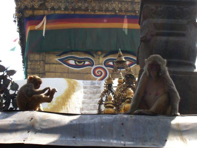Zdjęcia: Katmandu, małpie medytacje, NEPAL