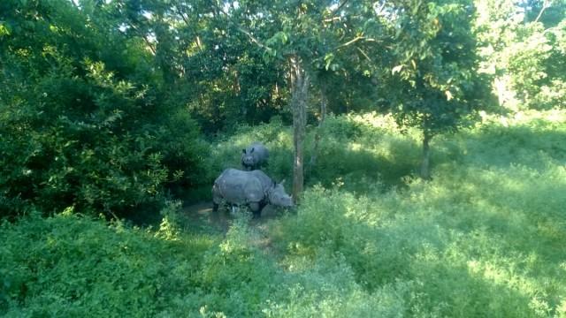 Zdjęcia: Park Narodowy Chitwan, Teraj, Nosorożce w Parku Narodowym Chitwan, NEPAL