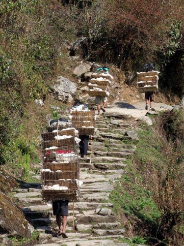 Zdjęcia: Gorepanie, Trekking wokół Annapurny, Nepalska sieć transportowa - kurczaki , NEPAL