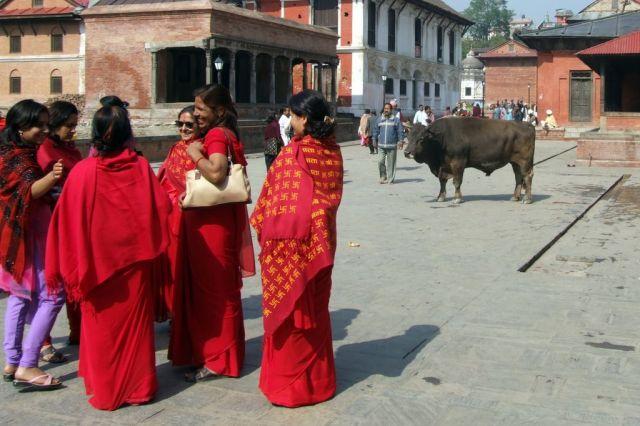 Zdj�cia: Kathmandu, Dolina Kathmandu, ...a m�wia ze byki reaguja na czerwony!, NEPAL