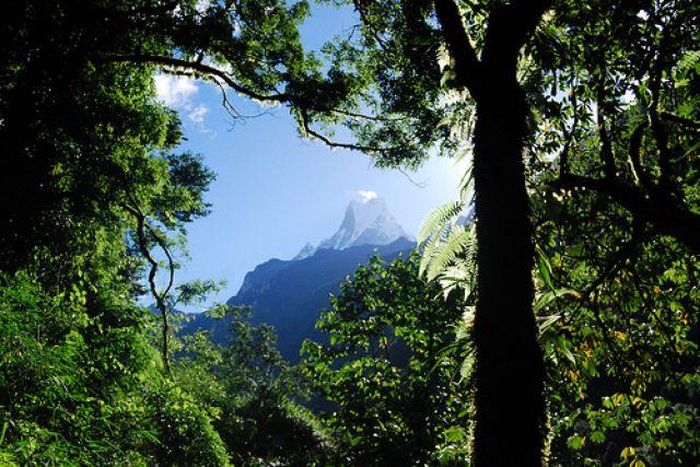 Zdjęcia: bamboo forest, chomrong, machhupuchre, NEPAL