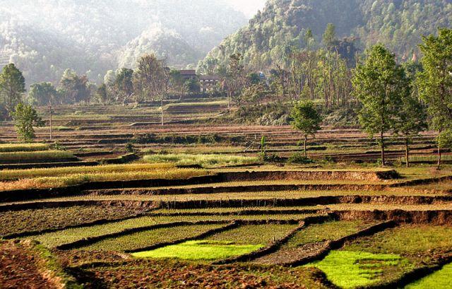 Zdjęcia: W drodze do Katmandu, tarasy 3, NEPAL