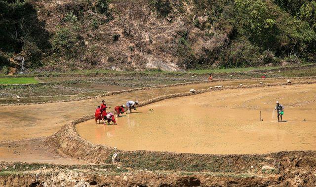 Zdjęcia: W drodze do Katmandu, Uprawa ryżu, NEPAL