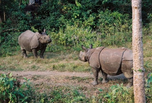 Zdjęcia: Chitwan, Safari, NEPAL