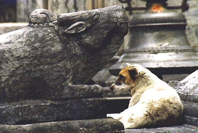 Zdjęcia: Kathmandu, Dolina Kathmandu, scenka w światyni Swayambunath, NEPAL