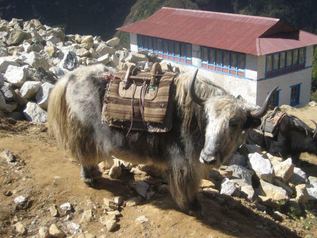 Zdjęcia: Himalaje, Zdjecie jak się patrzy!, NEPAL