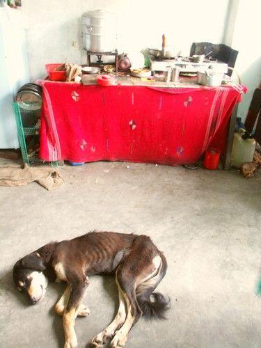 Zdjęcia: Beschishawar, Dolina Kathmandu, Kuchnia w barze., NEPAL