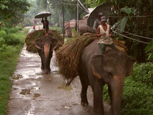 Zdjęcia: Wioska, Chitwan, Rolnicy przy pracy, NEPAL