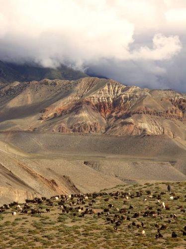 Zdjęcia: Okol. Kagbeni, Annapurna Trek, Wypas, NEPAL