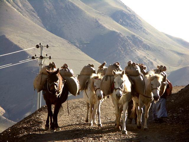Zdjęcia: okolice Kagbeni, Annapurna Circuit, Doborowe towarzystwo..., NEPAL
