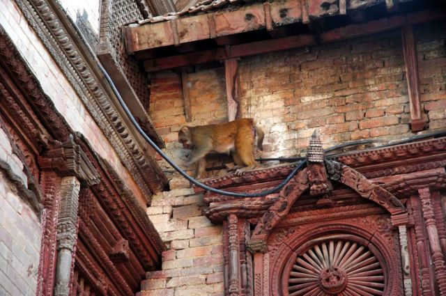 Zdj�cia: kathmandu, durbar sq, ka�dy znajdzie tu sw�j dom, NEPAL