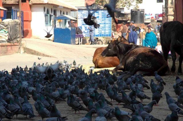 Zdjęcia: kathmandu, durbar sq, wszyscy razem, NEPAL