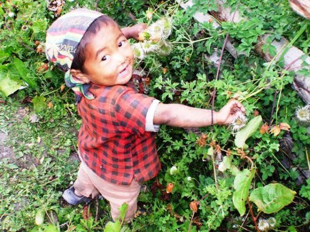 Zdjęcia: gdzieś na szlaku, kwiatki dla mamy, NEPAL