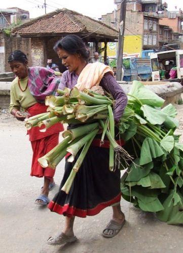 Zdjęcia: gdzies na szlaku.., z liściem pod pachą, NEPAL