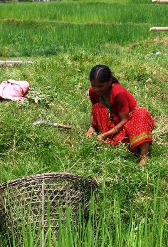 Zdjęcia: gdzies na szlaku.., z sierpem, NEPAL
