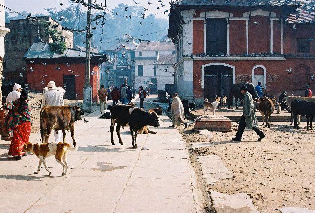 Zdjęcia: Kathmandu, okolice Pashupatinath, NEPAL