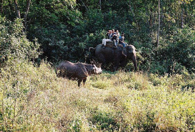 Zdjęcia: Chitwan, Terai, foto safari, NEPAL