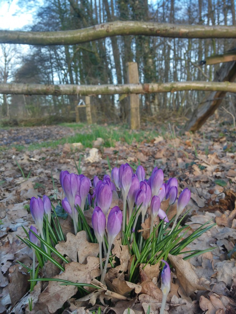 Zdjęcia: bakum, vechta, dzień dobry wiosno :), NIEMCY