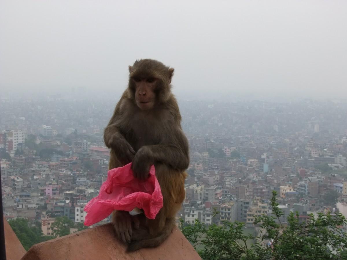 Zdjęcia: Kathmandu, Kathmandu, Kathmandu, NEPAL