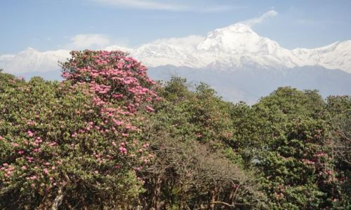 Zdjecie NEPAL / Annapurna / Nepal / Konkurs