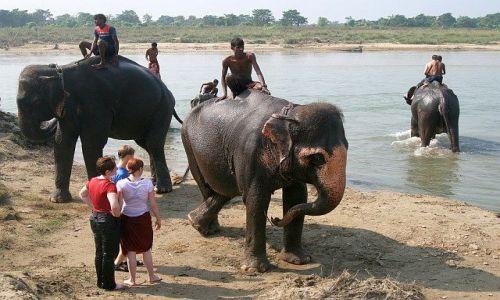 NEPAL / Terai / Chitwan - Sauraha / Kąpiel słoni