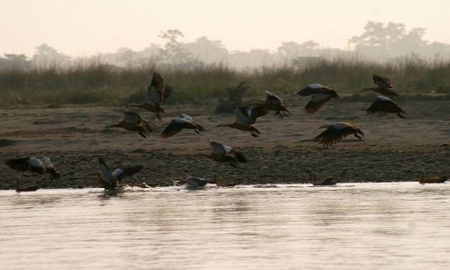 Zdjęcie NEPAL / Chitwan / Chitwan - Sauraha / ptaki nad rzeką Rapti