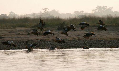 NEPAL / Chitwan / Chitwan - Sauraha / ptaki nad rzeką Rapti