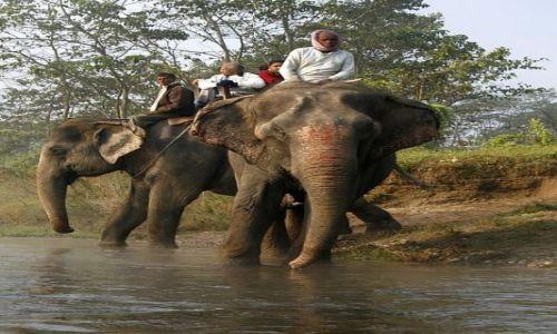 Zdjęcie NEPAL / Chitwan / Chitwan - Sauraha / Słon