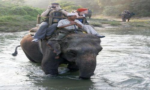 Zdjęcie NEPAL / Chitwan / Chitwan - Sauraha / Słonie