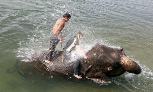 NEPAL / Chitwan / Sauraha / jedni kąpia się z kaczuszką a jedni ze słonikiem